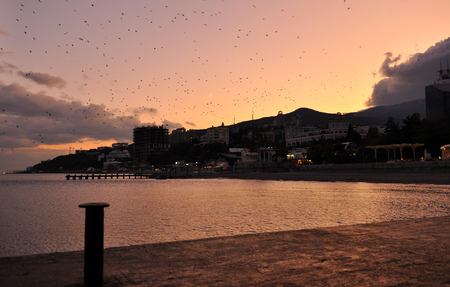 Against the backdrop of a bright orange sunset over the embankment of Yalta birds fly over the sea