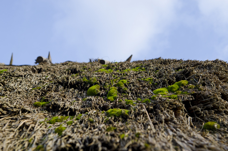 Bright green moss grows on the old thatched roof on a background of blue sky, close-up Stockfoto
