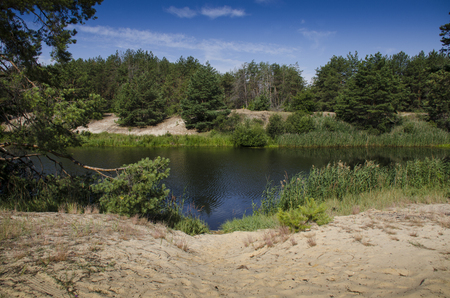 Sandy beach on the bank of a forest river against the background of a coniferous forest and a blue sky. Ukraine
