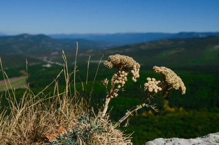 Green plants grow on a background of blue sky high in the mountains above the cliff. closeup Stock Photo