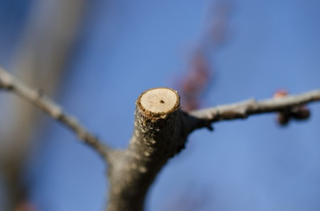 Garden work. Many circumcised young tree branches. Closeup