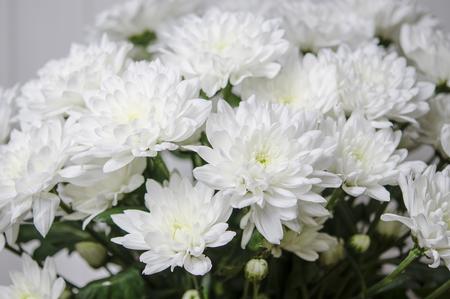 Un grande mazzo di crisantemi bianchi con gambi verdi si erge contro un muro di legno bianco