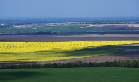 Boundless yellow, green and grey fields separated by trees