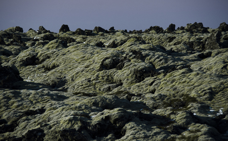 Huge old lava fields overgrown with Icelandic moss in an open-air emerald color Фото со стока