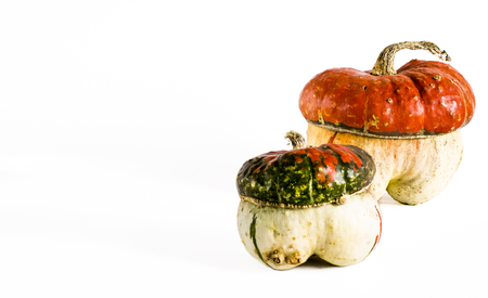 decorative pumpkins in the form of a mushroom with an orange hat and a long tail on a white background