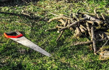 Garden work. Hand saw with a red handle lies on the green grass next to the cut branches Фото со стока