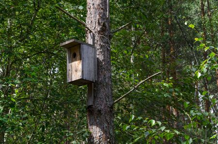 A wooden bird house on an old high pine tree