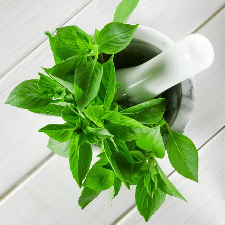 Fresh green basil in a white marble mortar on the table. Close-up