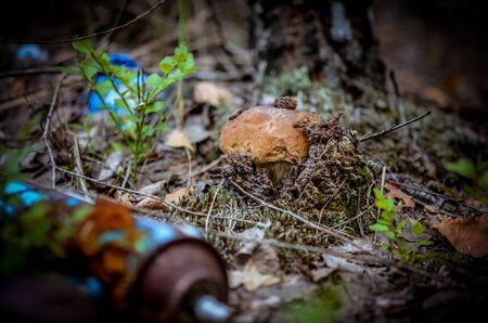 Destruction of nature. White mushroom grows in a landfill of toxic household garbage in the forest. Ecology