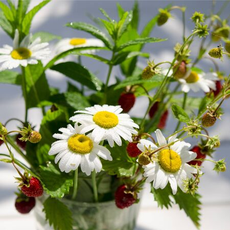 Branches of red ripe strawberries, white daisies and mint leaves stand in a glass of water on a wooden stump against the background of green grass