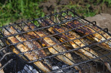 Picnic. Fresh sea fish cooks on a lattice on hot coals in the open air