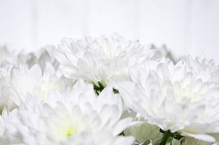 A large bouquet of white chrysanthemums with green stems stands against a white wooden wall. close-up
