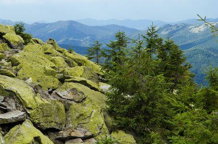 Kamm des Gebirges mit steinernen Stellen, bedeckt mit grünen Flechten und Hängen mit Fichtenwald in den Karpaten am Sommertag. Riesige Steine mit grünen Flechten liegen oben auf dem Berg vor dem Hintergrund hoher Bergkämme und blauem Himmel Standard-Bild