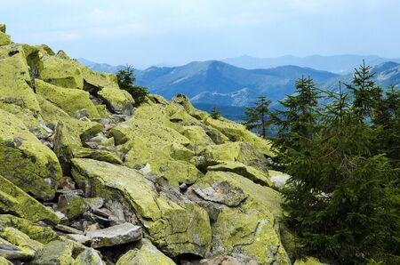 Crest of the mountain range with stone placers covered with green lichens and slopes with spruce forest in Carpathian Mountains at summer day. Huge stones with green lichen lie on top of the mountain against the backdrop of high ridges and blue sky