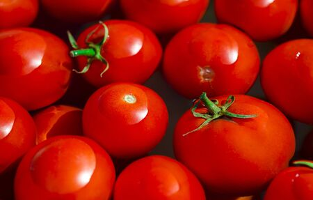 A fresh crop of red juicy tomatoes with green tails float in clean water. Ready for conservation
