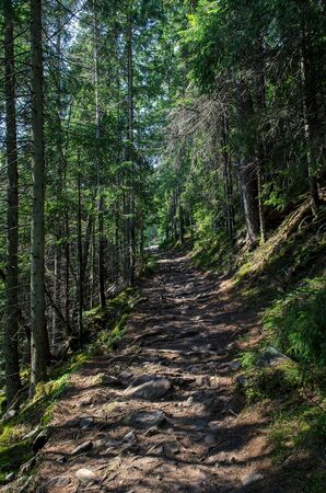 Forest high-altitude stone trail with roots of ancient wild wood. Climbing to the top Stock fotó
