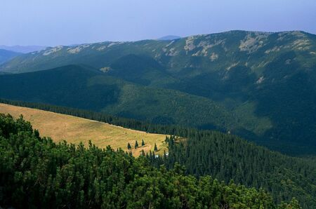 A mountain meadow where cows graze surrounded by mountain peaks where coniferous trees grow Stock fotó