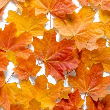 Yellow maple leaves lie on a white tree table. Background close-up Stockfoto - 131466995