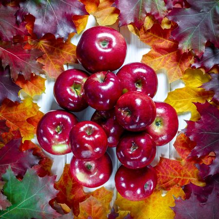 Yellow maple leaves and red juicy apples lie on a white wood background. Close-up Stockfoto
