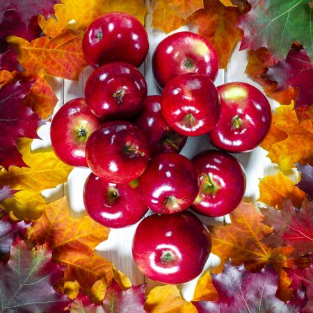 Juicy red apples lie on bright lydhomulti autumn leaves. Close-up 写真素材