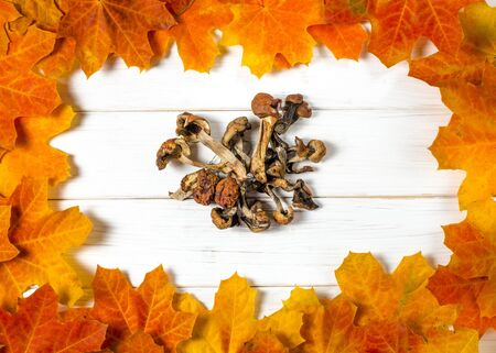 white dried mushrooms lie on a white wooden table on a background of yellow maple leaves. Close-up Stockfoto - 131824886