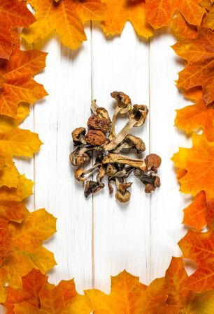 white dried mushrooms lie on a white wooden table on a background of yellow maple leaves. Close-up