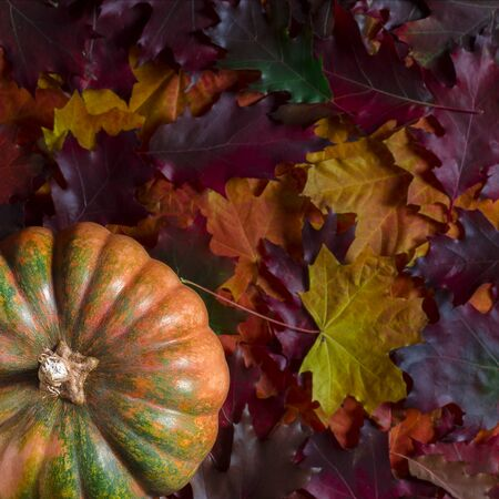 The orange textured pumpkin rests on the colorful autumn leaves. Close up of halloween pumpkin