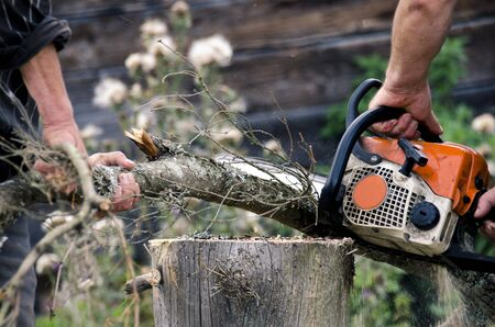 People cut trees in lichen with gasoline saw for firewood. Closeup of a professional chainsaw cutting wood. Chainsaw. Close-up of woodcutter sawing chain saw in motion, sawdust fly to sides. Concept is to bring down trees.