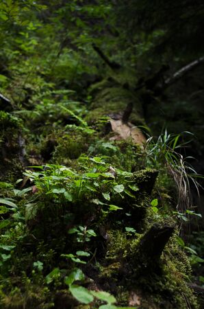 Green moss and green plants grow in a wild forest on an old fallen tree. Ecology Stockfoto - 131551600