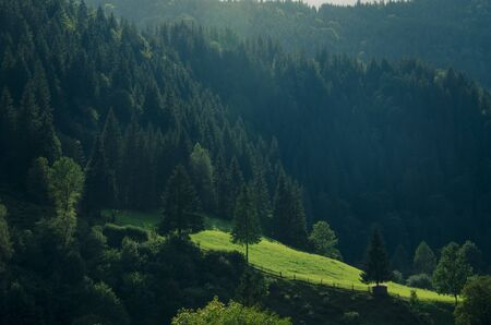 Morning mountain landscape with a green meadow and tall coniferous trees in the sun. Journey