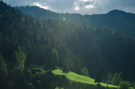 Morning mountain landscape with a green meadow and tall coniferous trees in the sun. Journey Stockfoto - 131551603