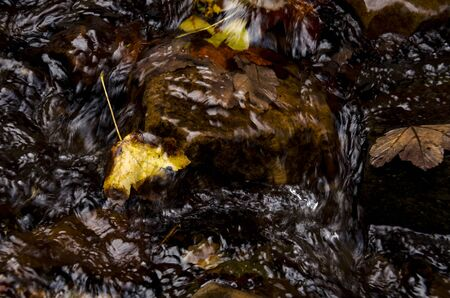 The yellow maple leaf lies on a stone in the stream of a mountain river. Mountain rivers 写真素材