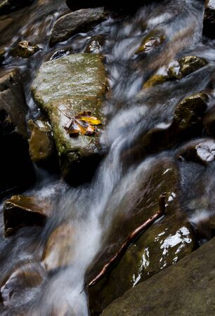 The yellow maple leaf lies on a stone in the stream of a mountain river. Mountain rivers Stockfoto - 131551606