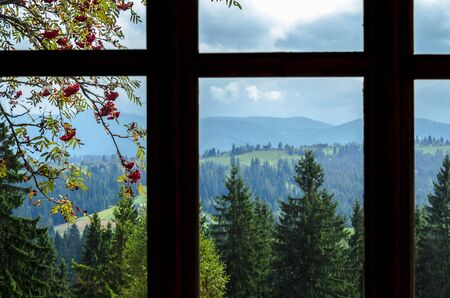 View from the window high in the mountains. Outside the window is a branch of ash, tall ancient trees and mountain ranges overgrown with forest Stockfoto