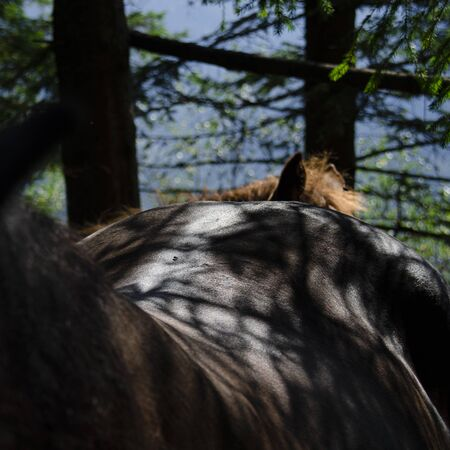 Smooth shiny back brown horse ready for horseback ride. animal