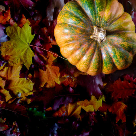 The autumn harvest of pumpkin lies on the colorful autumn leaves