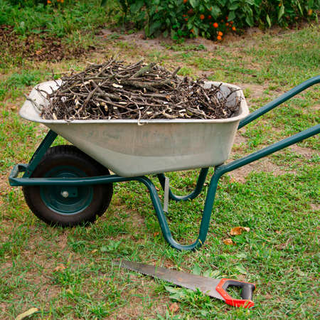 Garden work. Pruned branches of young trees lie in a wheelbarrow, which stands in the garden. countryside Reklamní fotografie