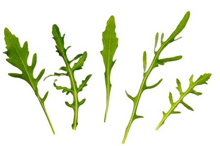 green arugula on white background