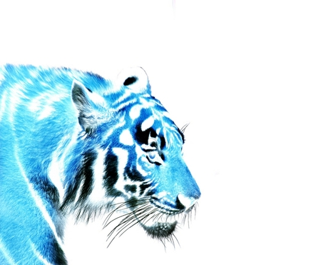 Texture blue tiger on white background
