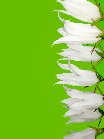Green background with white flowers Stock Photo