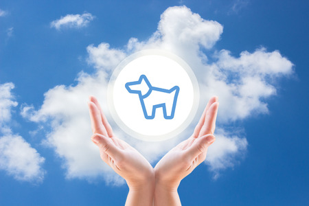 custody: dog protection, support dogs, custody dogs, medicine for dogs, services for dogs, treatment dogs