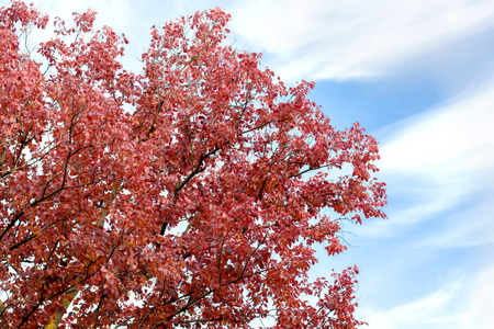 Autumn branch with red leaves on a background of sky with clouds Stock Photo