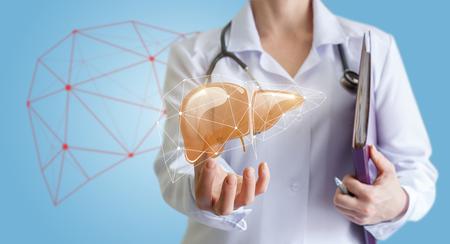 Arts toont menselijke lever.