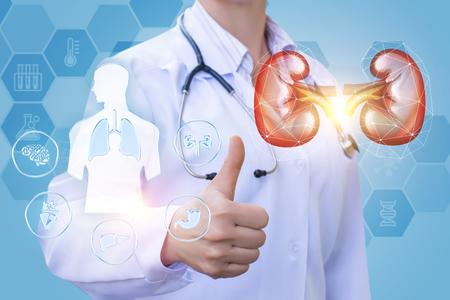 Dokter laat zien dat uw nieren het conceptontwerp hebben genezen.