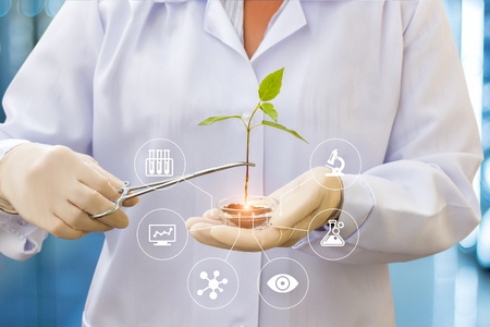 Biotechnology researcher works with a sample of the plant. Stockfoto