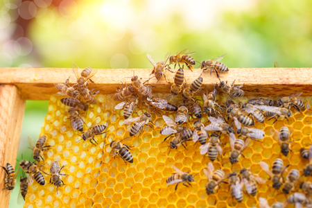 Bees swarming on a honeycomb on blurred background.