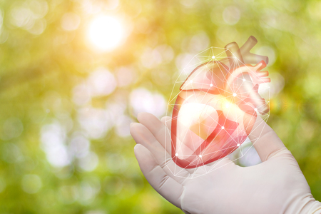 Heart in the hand of the surgeon on blurred background. Stock Photo