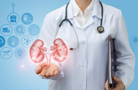 의사 비뇨기과 의사 파란색 배경에 신장을 보여줍니다.