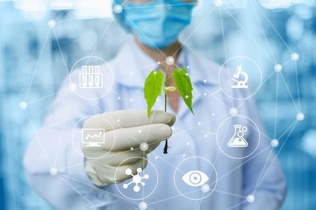Monster van een plant in de handen van een biotechnoloog op een onscherpe achtergrond. Stockfoto