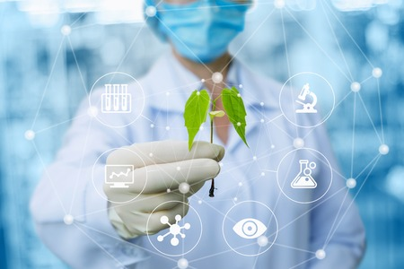 Muestra de una planta en manos de un biotecnólogo sobre un fondo borroso. Foto de archivo